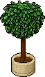 room_cof15_tree1