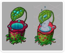 pitcher-plant1
