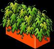 classic2_plantdivdr